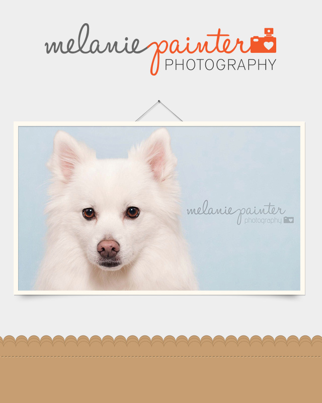 Melanie Painter Photography